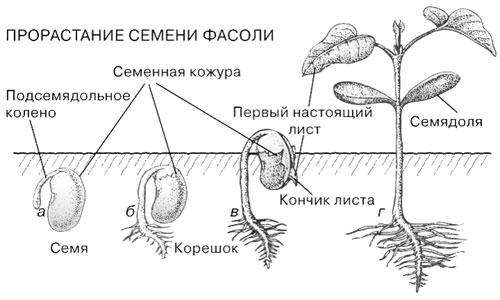 Изображение.